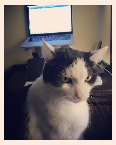 My cat Oreo says stop procrastinating and WRITE!